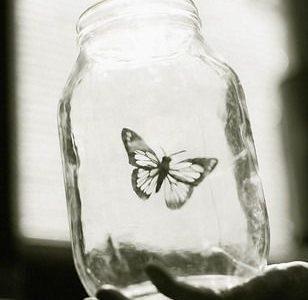 挣扎中的蝴蝶